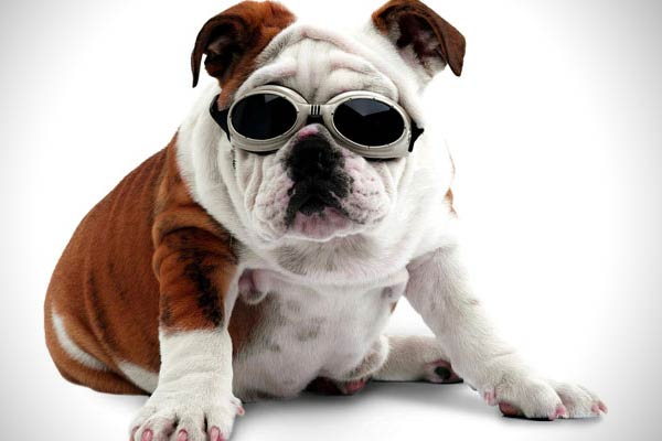 Eye Protecting Goggles for Pets